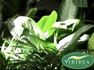 Le piante utili a purificare l'aria. Scoprile nel video