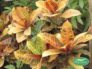 Le indistruttibili: piante per chi ha poco tempo