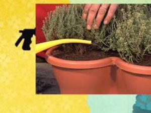 Come coltivare le erbe aromatiche. Lezioni di giardinaggio Compo