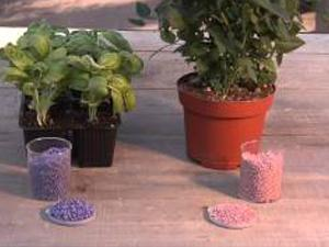 Come concimare fiori e piante. Lezioni di giardinaggio Compo