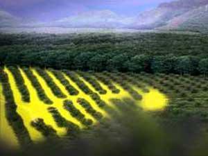 Bayer CropScience presenta Alion, il nuovo diserbante che dura ancora di più