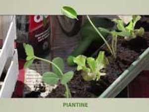 Verde verticale, idee per un giardinaggio sostenibile