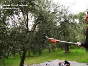 Come utilizzare le attrezzature Stihl per la cura dell'oliveto