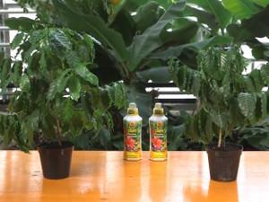 Quando irrigare le piante in vaso: i consigli
