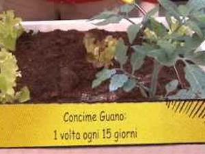 Come concimare l'orto in vaso. Lezioni di giardinaggio Compo