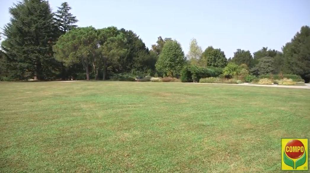 https://www.gardentv.it/guida-tutorial-consigli-giardino-prato-concime.html
