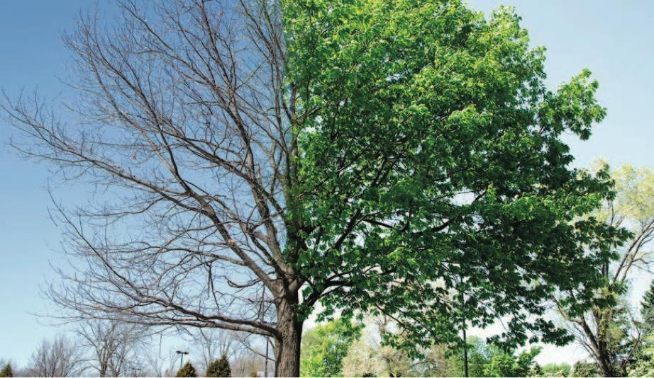 Lo sviluppo dell'albero e la sua diagnosi