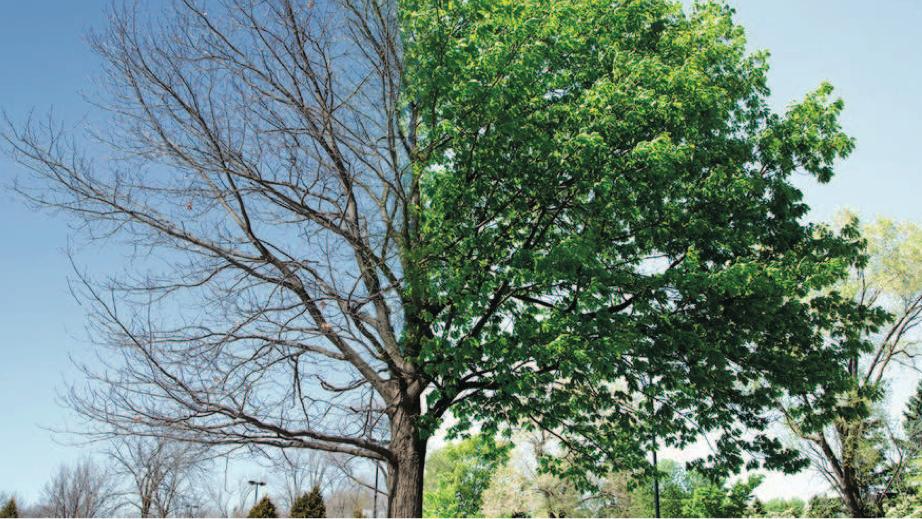 Architettura degli alberi, ultimi giorni per iscriversi al convegno