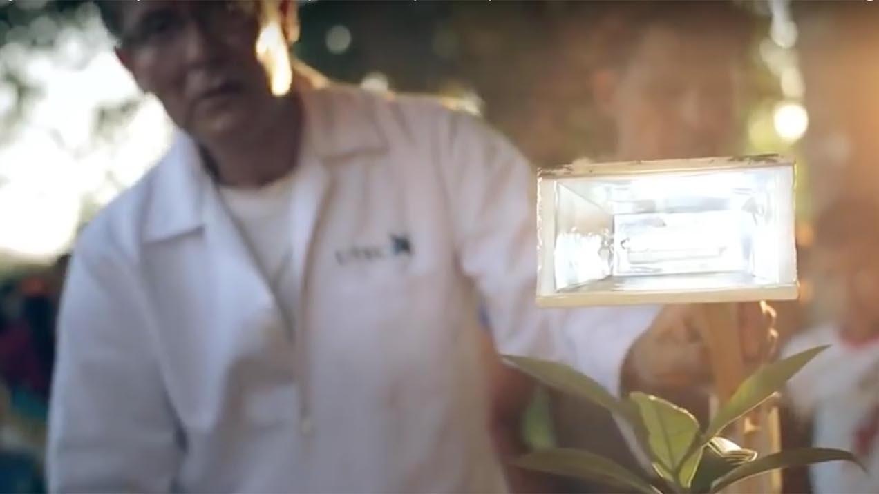 Plantalàmpara, la lampada che fa luce grazie alle piante
