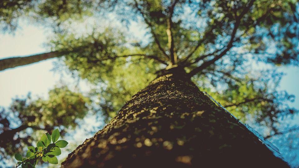 Endoterapia: corso per curare gli alberi