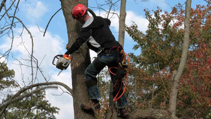 I corsi per diventare arboricoltore certificato