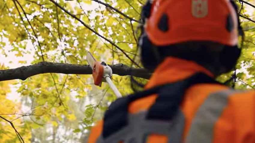 Corso avanzato di abbattimento alberi e gestione della motosega