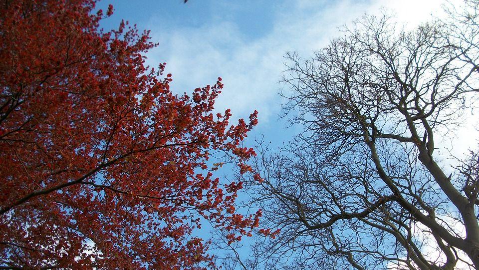 Arboricoltura ornamentale: formazione a distanza