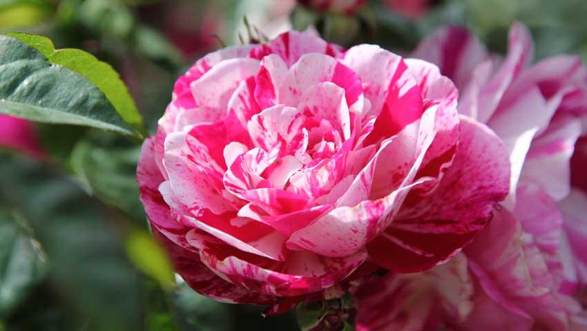 A maggio torna Perugia Flower Show