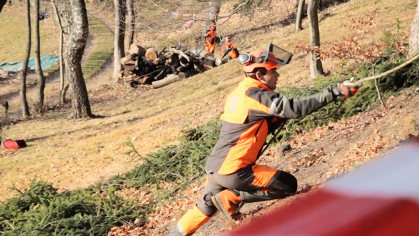 Abbattimento controllato, corso per operatori a terra