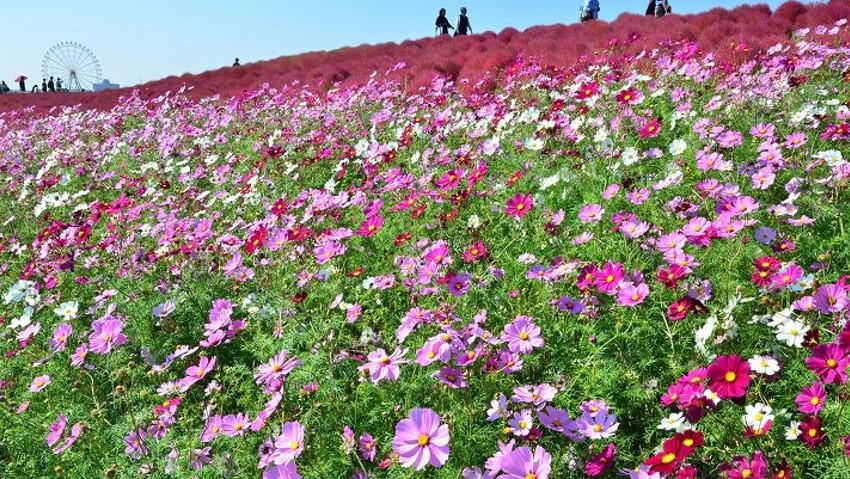 Il giardino dove è sempre primavera