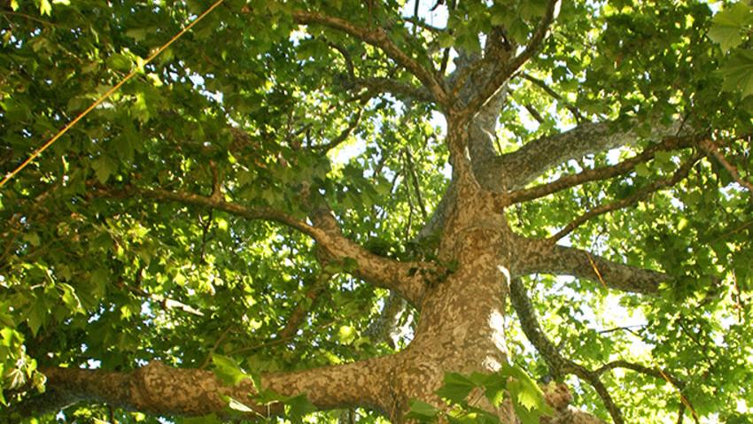 Corso pratico di arboricoltura