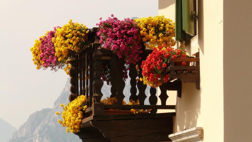 Balconi e terrazzi fioriti corsi gratuiti for Terrazzi fioriti