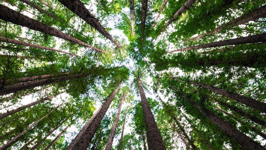Nel mondo ci sono 60.065 specie di alberi