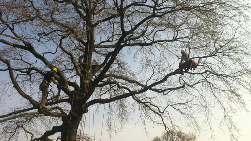 Corso d'aggiornamento per operatori di tree climbing