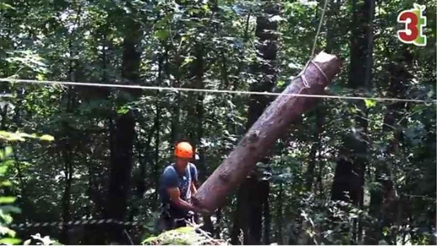 Abbattimento controllato in tree climbing