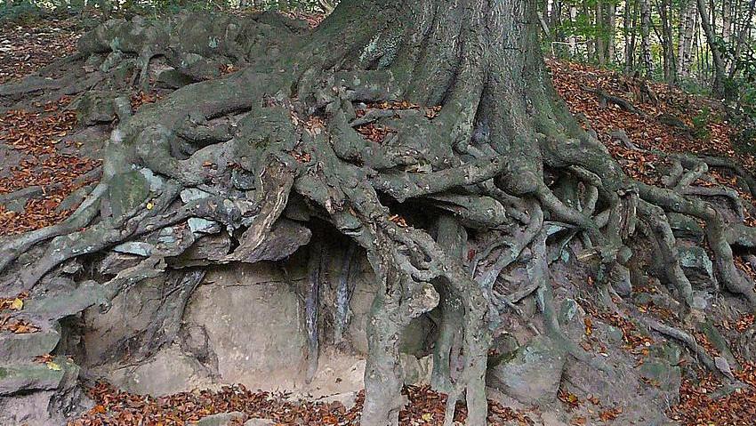 Architettura degli alberi: nuovo convegno
