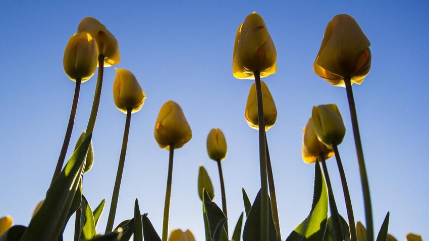Bulbi in giardino e in vaso, corso grauito