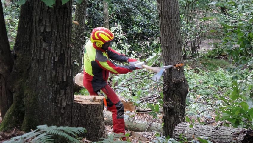 Operatori forestali: nuovi corsi in autunno