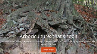 L'importanza delle radici degli alberi: forme e funzioni