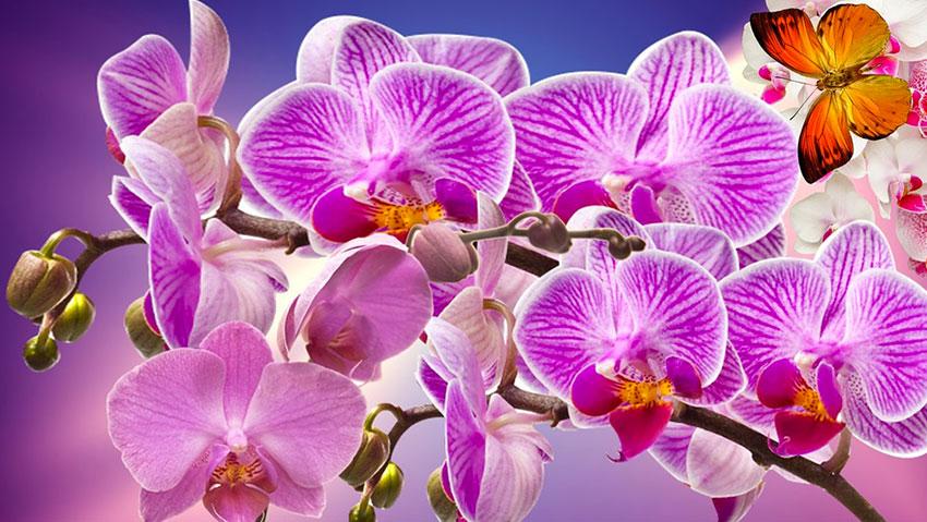 Al Flormart le olimpiadi delle orchidee