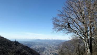 Tree climbing: novità per i corsi di Fondazione Minoprio
