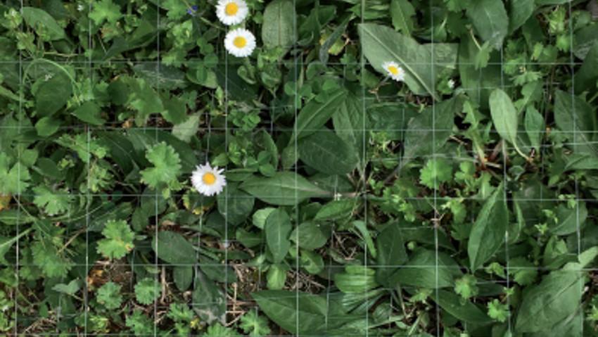 Il giardino contemporaneo, incontri di Fondazione Benetton