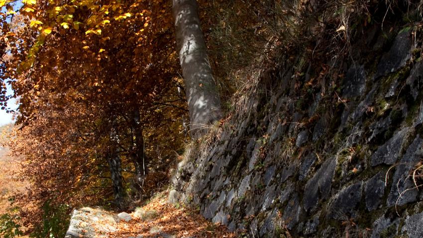 Foliage, passione per l'autunno all'Oasi Zegna