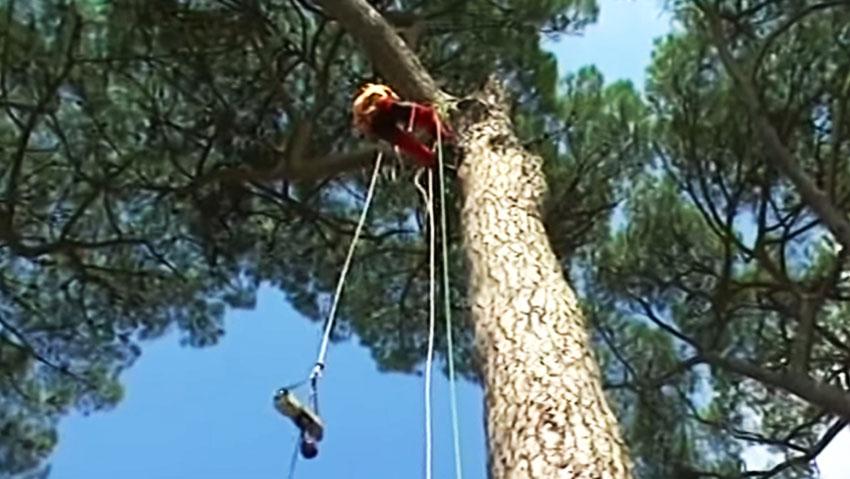 A Villa Borghese arrivano i tree climbers