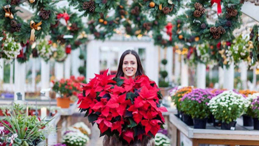 12 dicembre, il giorno della Stella di Natale