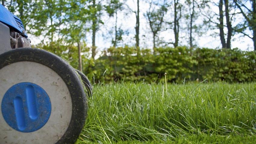 Italiani e giardinaggio: 1 su 3 lo pratica ogni settimana