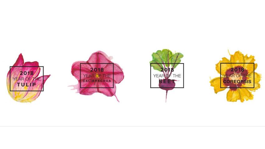 Le 4 piante da coltivare nel 2018