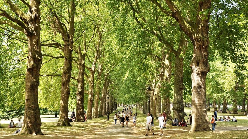 2018: l'anno del verde in città