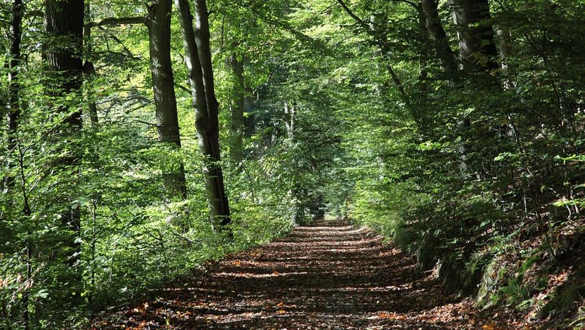 Corso di tecniche forestali per la biodiversità