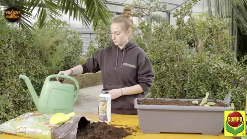 Come coltivare il broccolo, guida e consigli