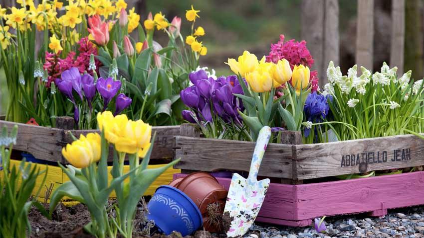 Aiuole fiorite con i bulbi: corso gratuito