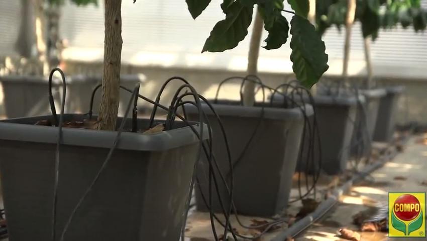 Orto in vaso, consigli sull'irrigazione