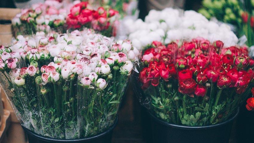 Florovivaismo: export da record