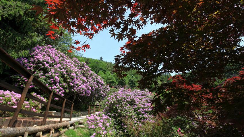 Passeggiate fiorite alla Conca dei Rododendri