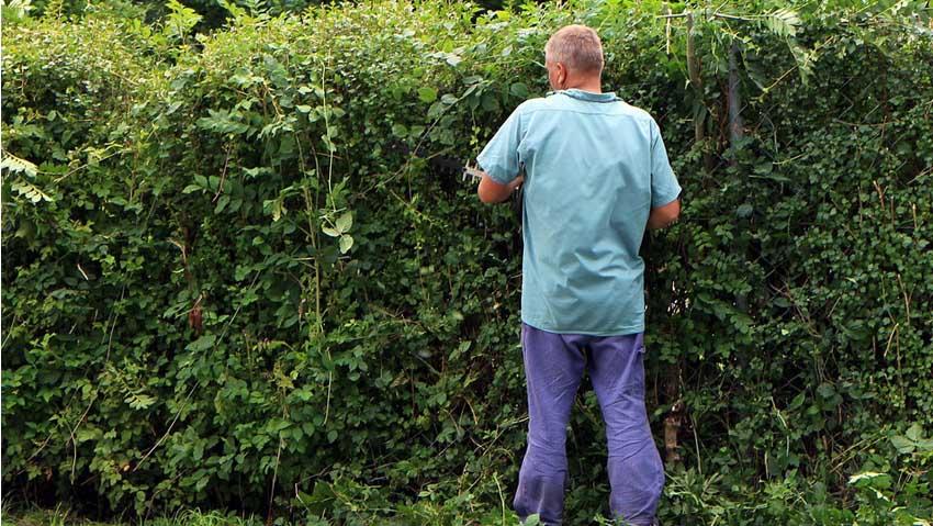 In crescita il numero di attività dei giardinieri