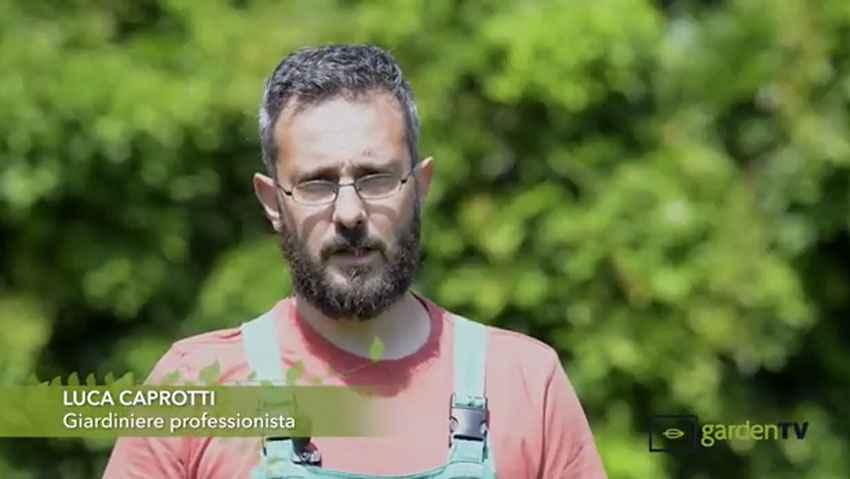 Consigli per la cura del verde dal giardiniere professionista