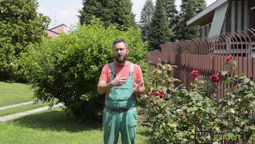 Concime per piante: biologico o chimico, qual è il migliore?