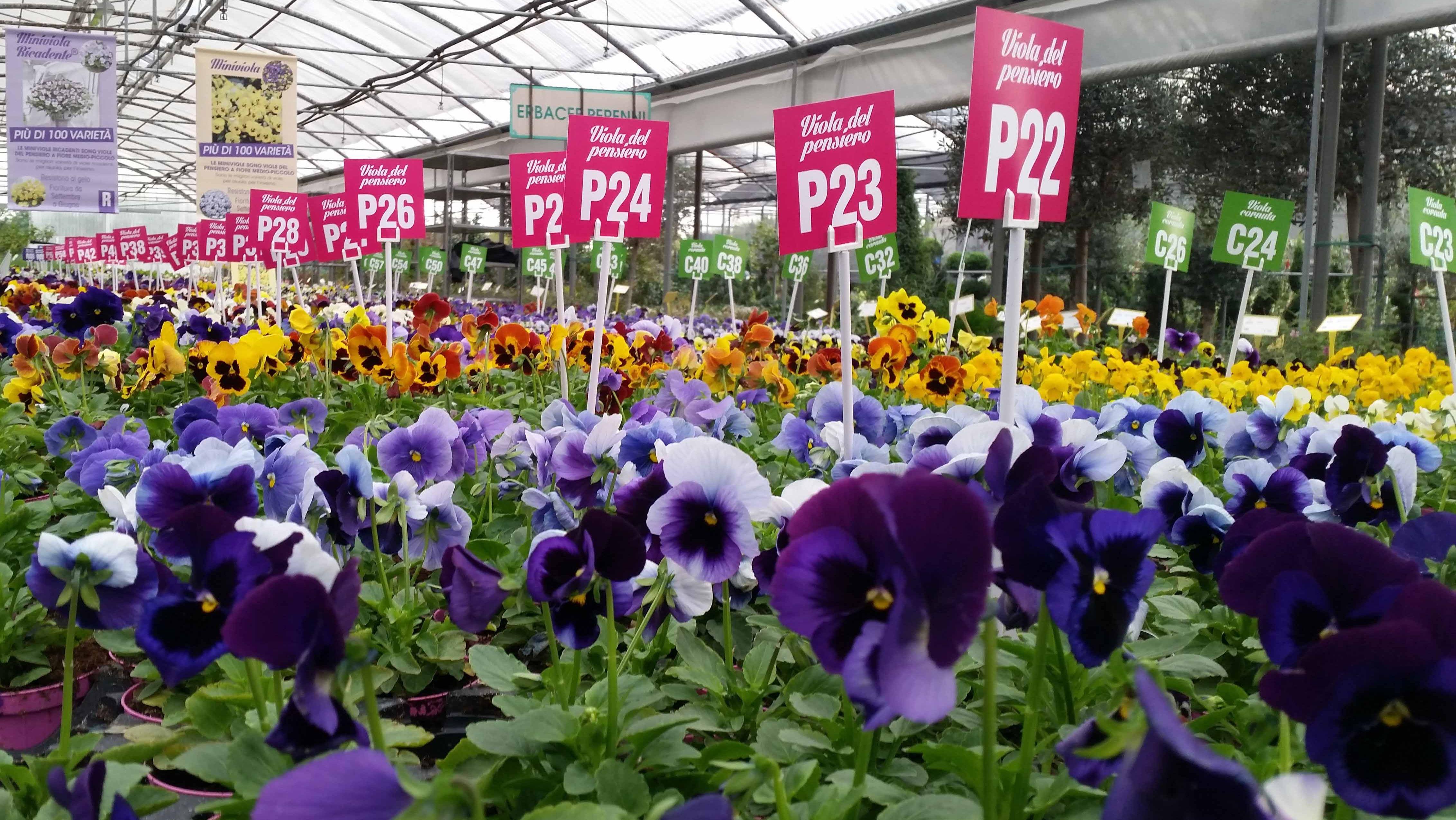 Garden center: torna la mostra delle viole