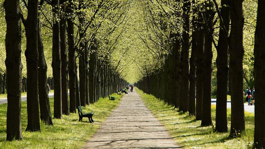 Italia, verde in aumento. Ecco le regioni con più alberi