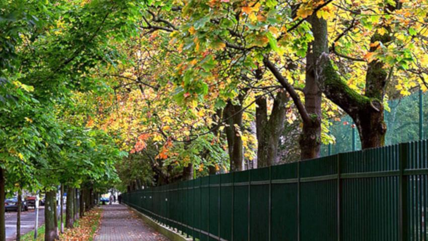 La gestione degli alberi in città